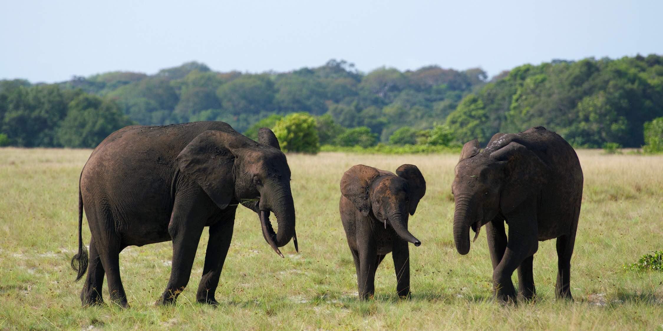 Loango National Park ロアンゴ国立公園 盧安果國家公園