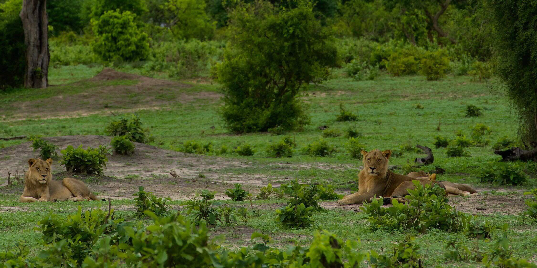 Chobe National Park チョベ国立公園 喬貝國家公園