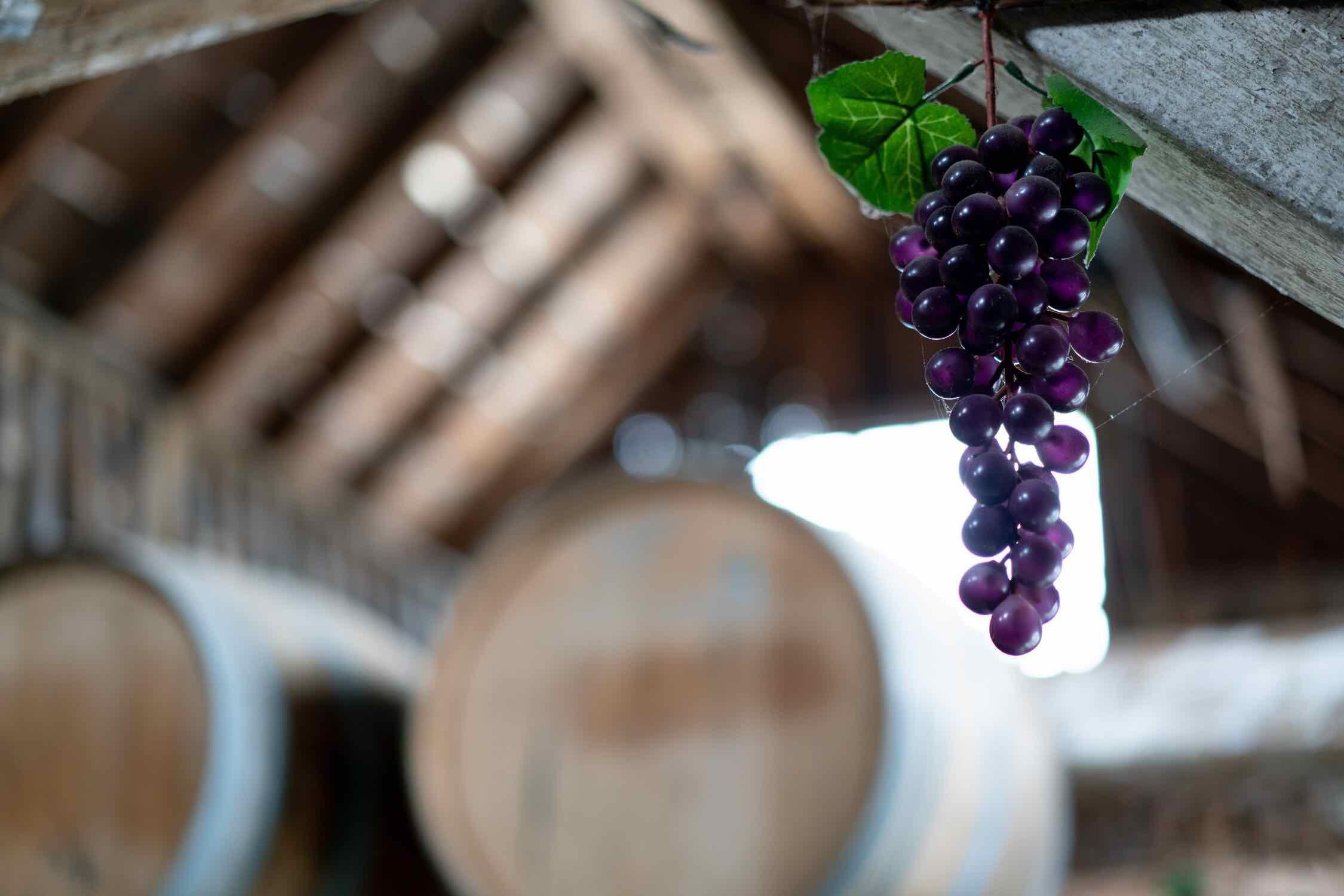 Black Prince Winery & Canadian Vinegar Cellars